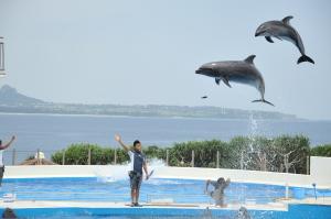 海豚oki-chanrn 劇場 (1)
