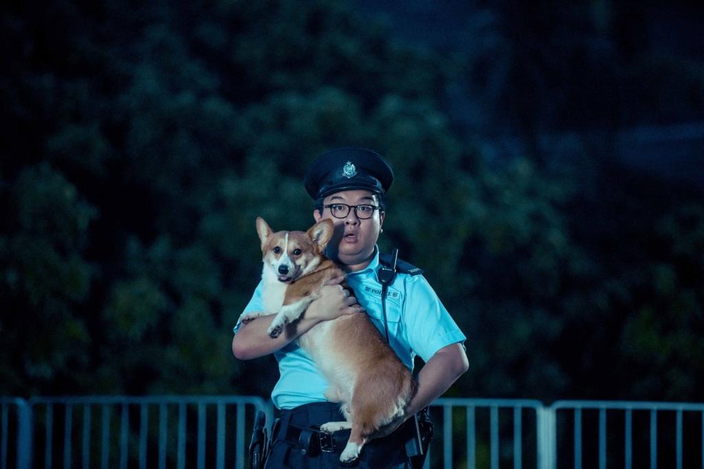 柯基犬懵懵由眾狗中試鏡選出 在片場總是乖巧配合拍攝
