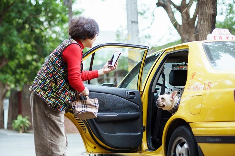 開計程車的莉莉奶奶撿到一隻被主人遺忘在車上的小狗 從而產生情感與牽掛