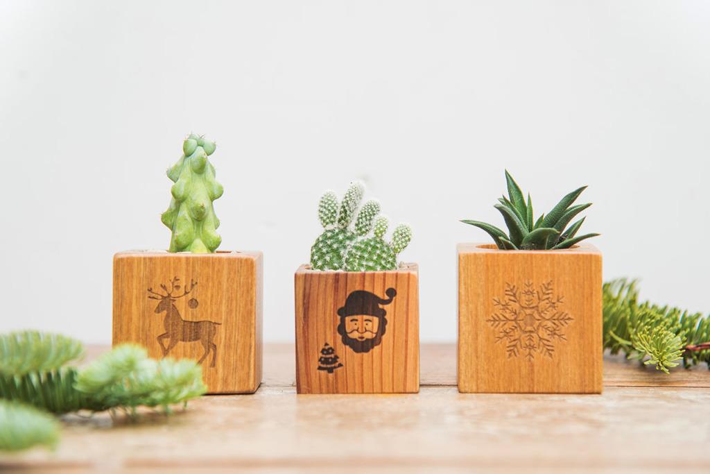交換植物3
