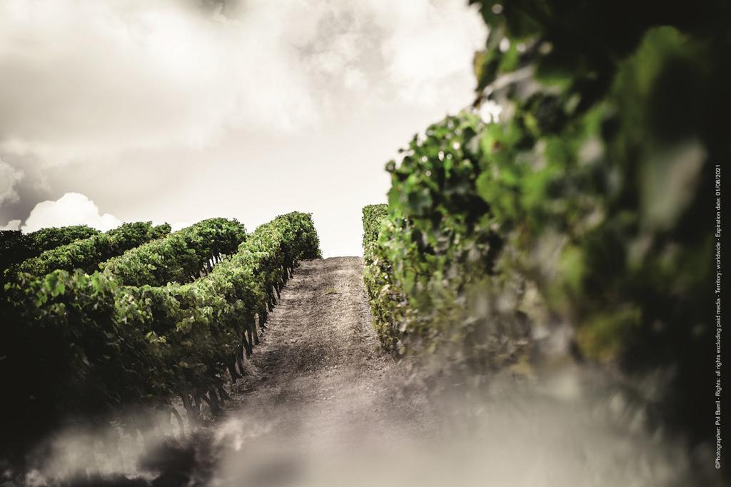 種植頂尖葡萄的夢想之地 – 大香檳區,路易十三關心的不只是干邑地區,更是世界各地的每一個城市